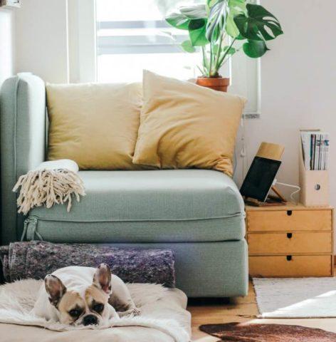 Cómo tu hogar puede mejorar tu salud