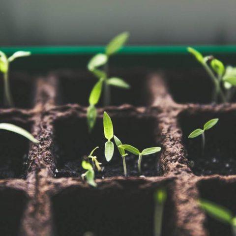 Los criterios ESG y su importancia